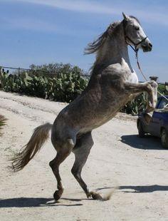 cavallo, by marcuz