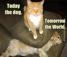 Carlton's World Of Funny Cats: Carlton's Plans For World Domination