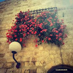 Such beauty, the flowers of Israel