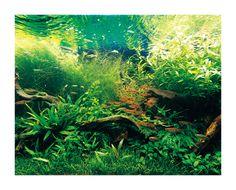 Aquascaping, Aquarium Aquascape, Aquarium Landscape, Nature Aquarium, Planted Aquarium, Tropical Fish Aquarium, Aquarium Fish Tank, Fish Tanks, Underwater Fish