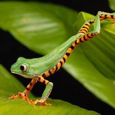 Frog Yoga (Anurasana)