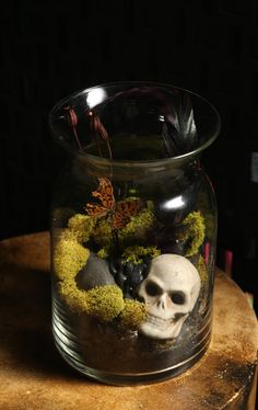 Taxidermy terrarium butterfly antique skull moss vase home decor goth DIY kit. $60.00, via Etsy.