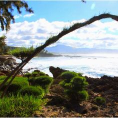 Hawaii, North Shore