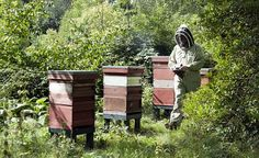 The Royal Beekeeper: Her Majesty the Queen has had beehives in her garden at Buckingham Palace since at least 2009.  Great PBS show all about it.  God save the Queen