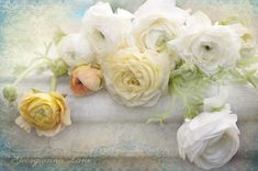 Floral Photography -  White Ranunculus,  Floral Still Life Photograph, Shabby Wall Decor on Etsy, $30.00