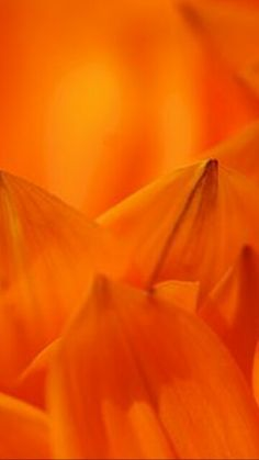Orange - Color & Charm - Flower Macro