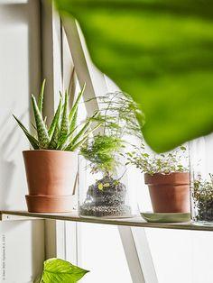 Sköna, gröna rum | IKEA Livet Hemma – inspirerande inredning för hemmet