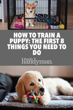How to Train a Puppy: The First 8 Things You Need to Do art breeds cutest funny training bilder lustig welpen Puppy Training Tips, Crate Training, Training Your Dog, Potty Training, Agility Training, Training Collar, Training Equipment, Leash Training, Toilet Training