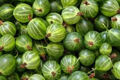 Gooseberry Recipes, Gooseberry Patch, Festivals In England, Digestion Difficile, Curd Recipe, Wild Edibles, Scented Oils, Seasonal Food, Calories