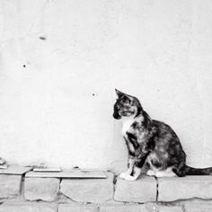 Calico Cat Photograph - Black Cat - animal photography print, black and white, cute kitten, wall art,  efpteam, fpoe
