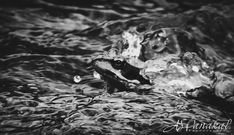 The frog on Black n White / Clickasnap Nature View, Image Types, Black N White, Amphibians, Natural Beauty, Wildlife, Animals, Animales, Animaux
