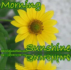 Good morning Sunshine friends, and I am so happy inside me that I know you :))) Thank you :))) and have a bright sunny day, with lots of laughter :)))....:)