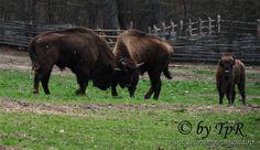 zimbri mari_2 Romania, Horses, Instagram Posts, Animals, Places, Animales, Animaux, Animal, Animais