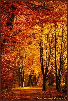 Glenariff Forest Park, County Antrim, Northern Ireland; photo by .Frank Kavanagh