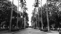 Praça da Liberdade, Belo Horizonte / MG.