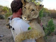 A lioness reunites with the two German conservationists who saved her life in Botswana, forming an incredible bond.