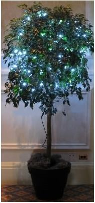 ficus tree with lights - white lights instead of these bluish/greenish ones though