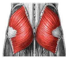 Shin Splints and Weak Glutes By: Dr. Peggy Malone This is something that I've written about in a previous post but it is worth revisiting especially because this subject is key in preventing and treating the pain of Shin Splints. It's also relevant at this time of the year when many athletes are coming Continue Reading
