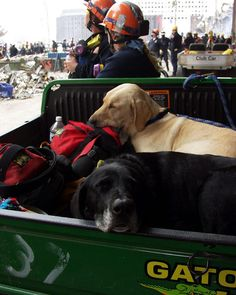 K-9  dogs who helped  in rescue effort at Ground Zero - 9/11