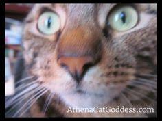 Athena, Cat Goddess