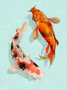 "Koi fish are the domesticated variety of common carp. Actually, the word ""koi"" comes from the Japanese word that means ""carp"". Outdoor koi ponds are relaxing. Koi Fish Drawing, Fish Drawings, Pond Drawing, Art Drawings, Koi Fish Pond, Fish Ponds, Koi Kunst, Presets Photoshop, Koi Painting"