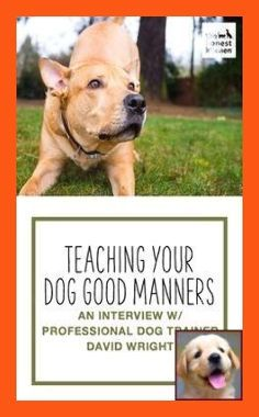 Tips On How To Efficiently Train Your Bad Dog Behavior Dog Training Tips And Tricks In 2020 Dog Training Dog Clicker Training Puppy Training