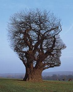 mrockstyle: Pink Floyd's Tree of Half Life album cover art by Storm Thorgerson picture on VisualizeUs on imgfave Storm Thorgerson, All Nature, Amazing Nature, Weird Trees, Cool Pictures, Cool Photos, Interesting Photos, Amazing Photos, Funny Pictures