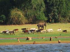 Nagarhole National Park - in Karnataka, India