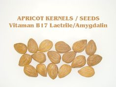 Apricot Kernels source of vitamin Vitamin B17, Apricot Seeds, Cancer Fighting Foods, Apricot Kernels, Plant Based Nutrition, Herb Seeds, Organic Plants, Vitamins And Minerals, Healthy Drinks