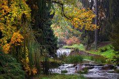 International Garden Photographer of the Year 2020 - Gartenpraxis Fine Art Photography, Landscape Photography, Digital Ink, Autumn Scenes, Autumn Forest, Landscape Prints, Russian Art, Tree Art, Fine Art America