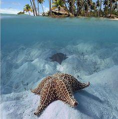 oceanic(...) Quando sentir que alguém é especial para você, diga a ele o que sente, e terá feito um momento de felicidade na vida de alguém. life