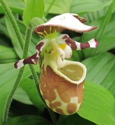 orquidea                                                                                                                                                                                 Mais