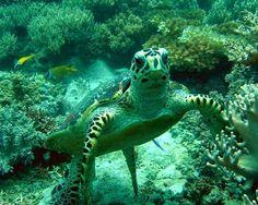 Under Water World - Terengganu, Malaysia