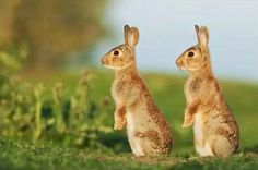 Animal world twins, how can you be so cute-10