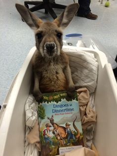 And this joey who's ready for his bedtime story. | 39 Photos For Anyone Who's Just Having A Bad Day