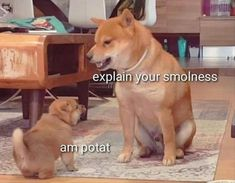 Funny memes likes everyone. But if we can add little bit stupidity here then funny memes become more funny. 20 Stupid Memes Just for You. Animal Jokes, Funny Animal Memes, Dog Memes, Funny Animal Pictures, Cute Funny Animals, Stupid Funny Memes, Funny Images, Best Funny Pictures, Funny Dogs