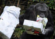 Christmas animals around the world