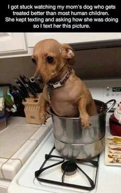 Just boiling some hotdogs! funny tumblr follow LOLFACTORY on...