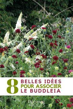 Gardening, Allium, Heaven On Earth, Horticulture, Aloe Vera, Garden Plants, Perennials, Planters, Christmas Tree