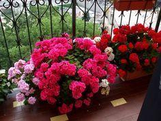 Organic Gardening For Dummies Refferal: 7203094553 Outdoor Plants, Potted Plants, Gardening For Dummies, Front Gardens, Garden Junk, Garden Boxes, Cactus Y Suculentas, Gardening Gloves, Ikebana