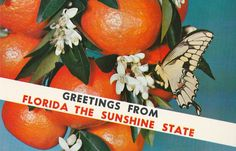 Vintage 1950s Postcard Greetings from Florida The by MookieDesigns Gin Rummy, Moving To Florida, Sunshine State, Orange Blossom, Vintage Postcards, United States, Fruit, Ephemera, Magazines