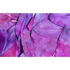 Pattern Violet Dry Leaves Wallpapers | 1440x900 ❤ liked on Polyvore featuring pictures, purple, backgrounds, purple pictures and filler