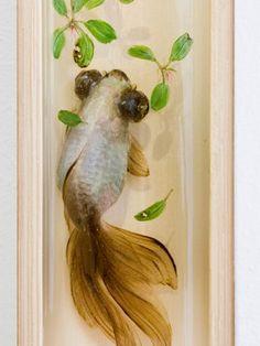 Riusuke Fukahori - Goldfish