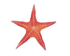starfish watercolor - Yahoo Image Search Results