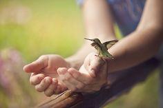 Hand Held Hummer   Flickr - Photo Sharing!