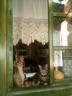 Kozbeyli köyü şakirin taş kahvesi ...