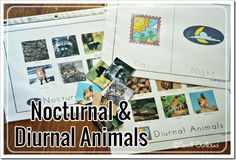 Nocturnal animal sorting activity for toddlers and preschoolers from @maureenspell