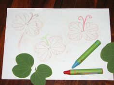 Make butterfly leaf rubbings by colouring over leaves placed under paper.  Remember to put the leaves vein-side-up for best results.