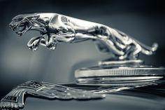 That Jaguar looks like it's leaping out of the bokeh Aston Martin Dbs, Jaguar E Typ, Jaguar Cars, Vintage Racing, Vintage Cars, Car Symbols, Mercedes Amg Gt S, Car Hood Ornaments, Free Phone Wallpaper