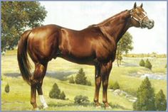 Coosa, an American Quarter Horse, and great-grandfather of our amazing mare, who looks a lot like him. We may be Dutch, but it's quarters and paints for us. They're amazing horses. #AQHA